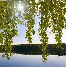 Kuvahaun tulos haulle järvimaisema kesä