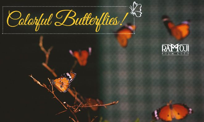 Experience the unique pleasure of spotting hundreds of most spectacular & fascinating butterfly species inspired for all ages from the nature @ Butterfly Park in The Wold's Largest Ramoji Film City.