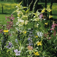Native Plants For Texas Brighten Gardens Throughout The Seasons. Learn  About Texas Natives At Free