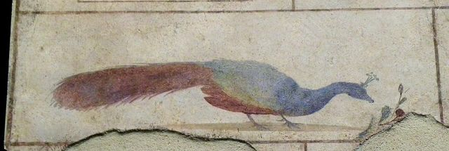 A peacock | Peacock in a painted frieze from a small mausoleum (colombarium) near Porta Maggione. The mausoleum was owned by the family of T. Statilius Taurus, an aristocrat close to the emperor Augustus. Dated ca. 25-1 BC.