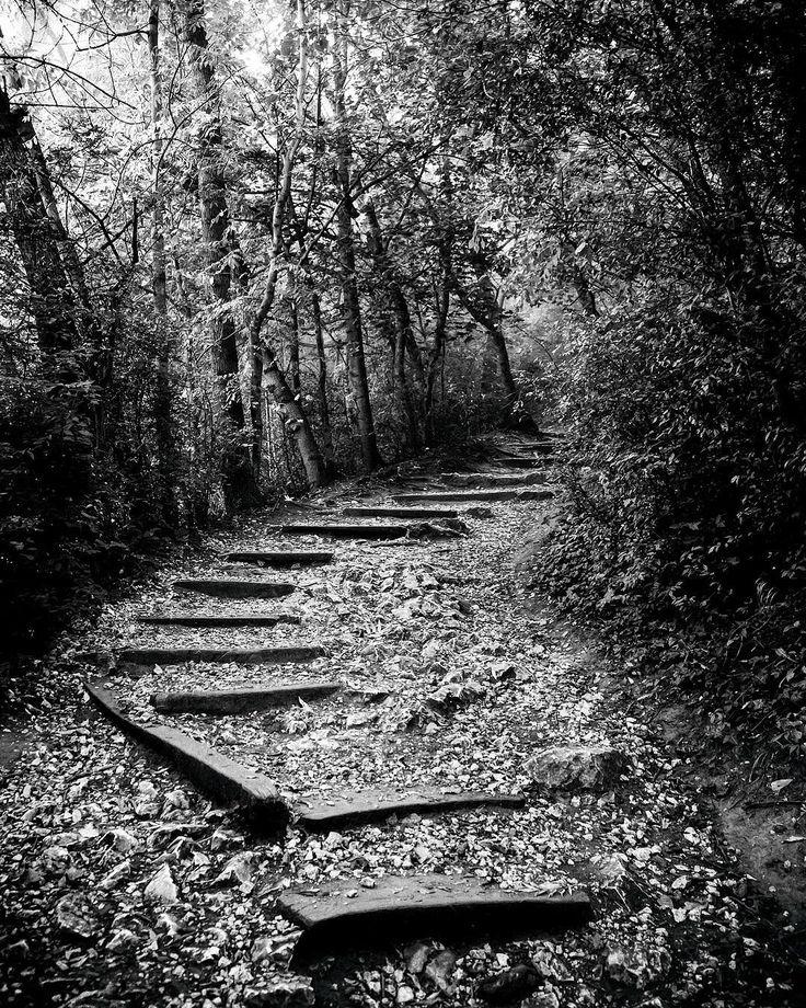 La strada verso la verita. #la verita #thepath #mikulov #moravia #blackandwhiteonly @only.blackandwhite #forest @reubenchircop #share