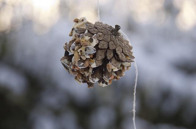 Zelf vogelvoer maken. Prima bezigheid met de kinderen om de winter te verankeren: zorgdragen voor anderen en kracht van energie en goed voedsel zichtbaar en tastbaar maken!
