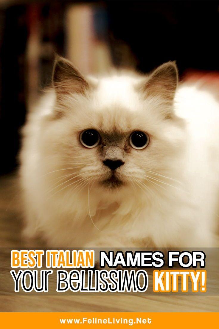 Felineliving Net Cat Names Cats Munchkin Cat