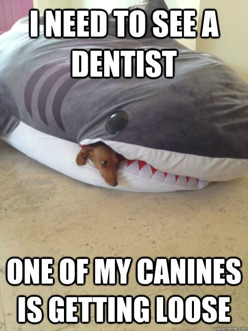 Dentist.... SHARK WEEK
