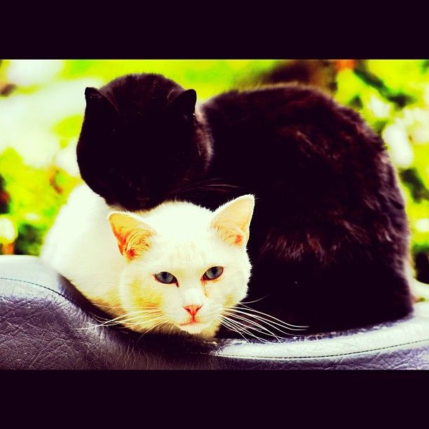 White cat and Black cat