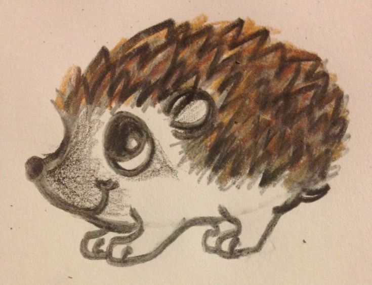 Line Drawing Hedgehog : Hedgehog drawing google search art instructions