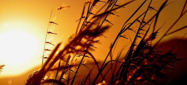 Los colores del amanecer en el Delta del Ebro.