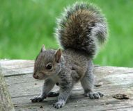 Tell NY- Stop Squirrel Slaughter Contest