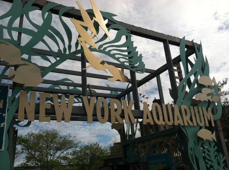 New York Aquarium #ConeyComeBack via @Nicole Feliciano