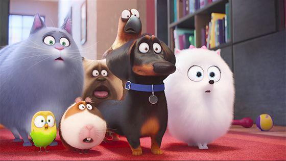 Тайная жизнь домашних животных  The Secret Life of Pets  2016 - Фильмы - Афиша