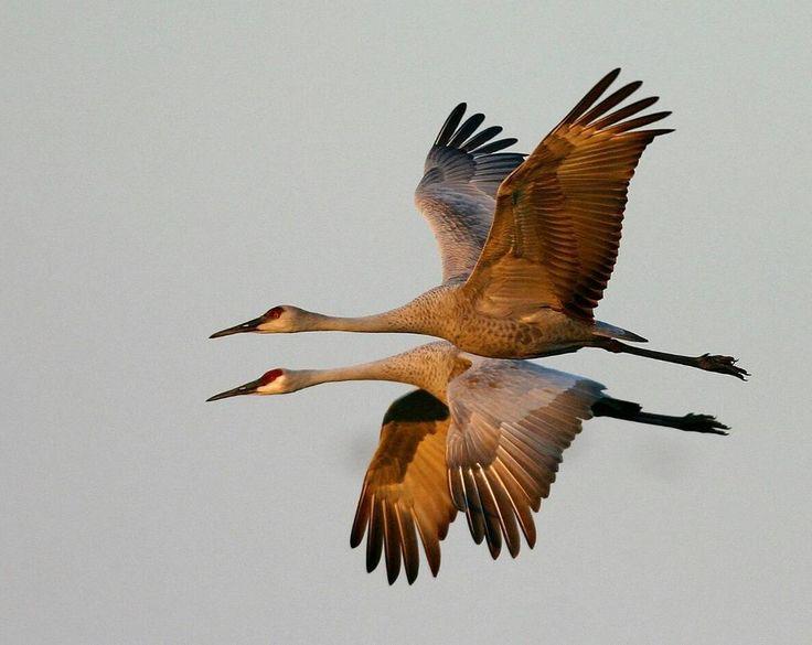 Mejores 86 imágenes de aves en Pinterest | Animales, Pájaros bonitos ...