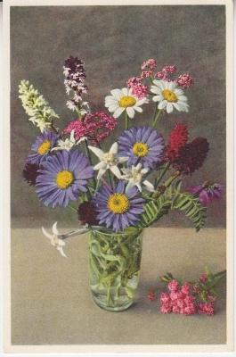 Thor E Gyger Postcard - 3087 Bergblumen, Fleurs des Alpes, Mountain flowers