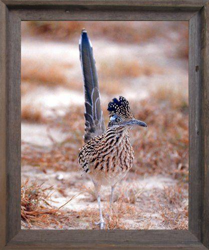 Greater Roadrunner Wild Bird Animal Wall Decor Barnwood F... https://www.amazon.com/dp/B00HKEU7KC/ref=cm_sw_r_pi_dp_x_vWqqybJTCWTWW