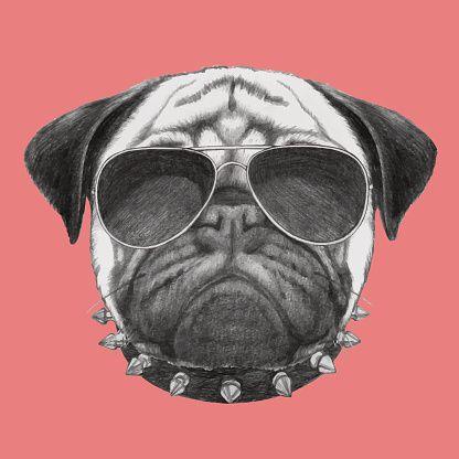 Mão desenhadas Retrato de cão Pug com gola e óculos de sol. - ilustração de arte em vetor