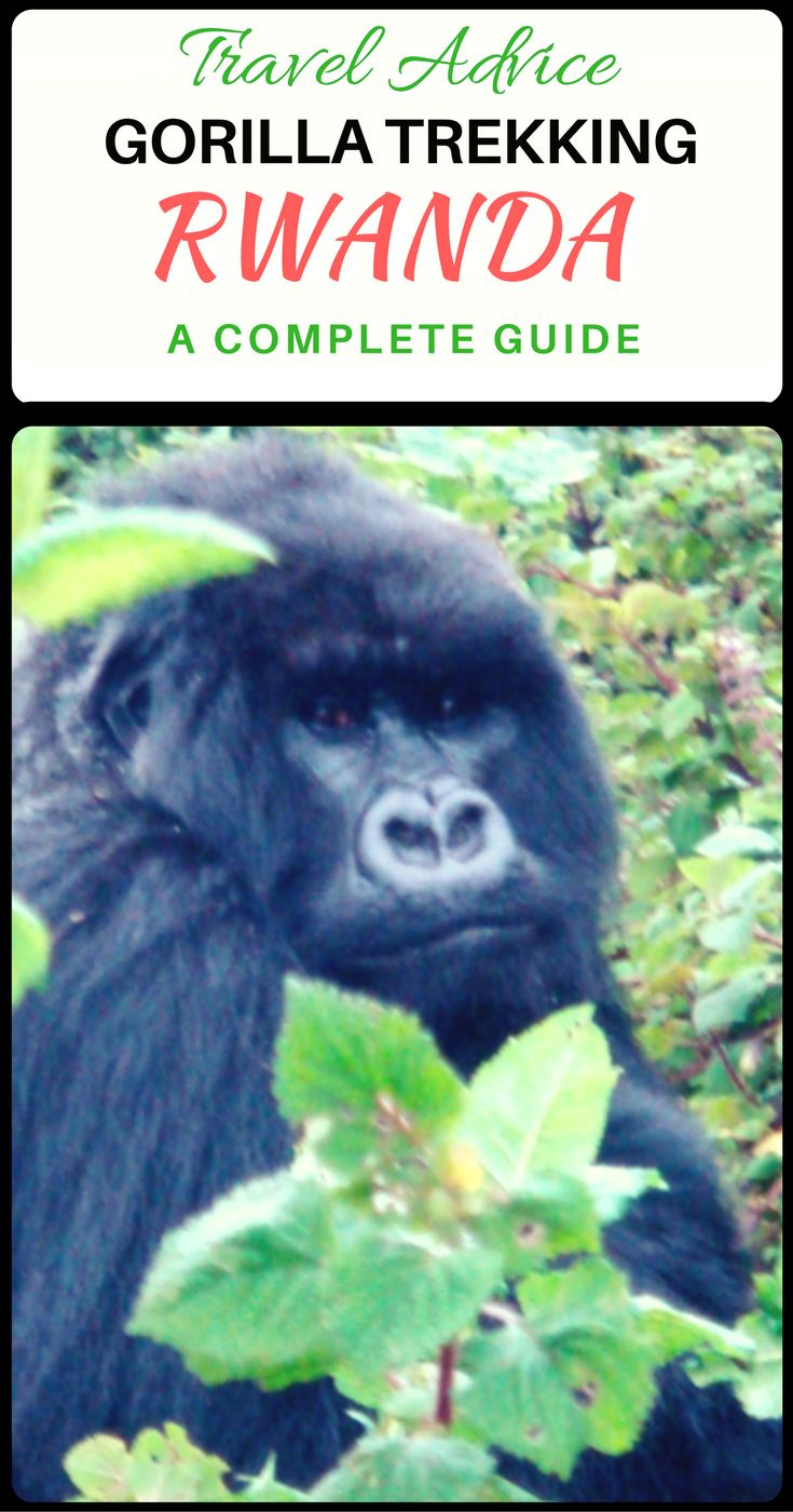 Everything you need to know about Gorilla Trekking in Rwanda