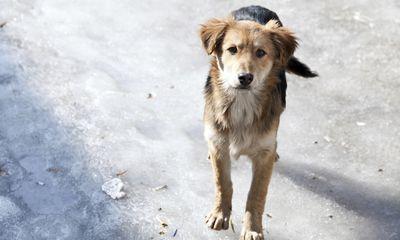 Spannend: drone filmt redding van hond op bevroren meer