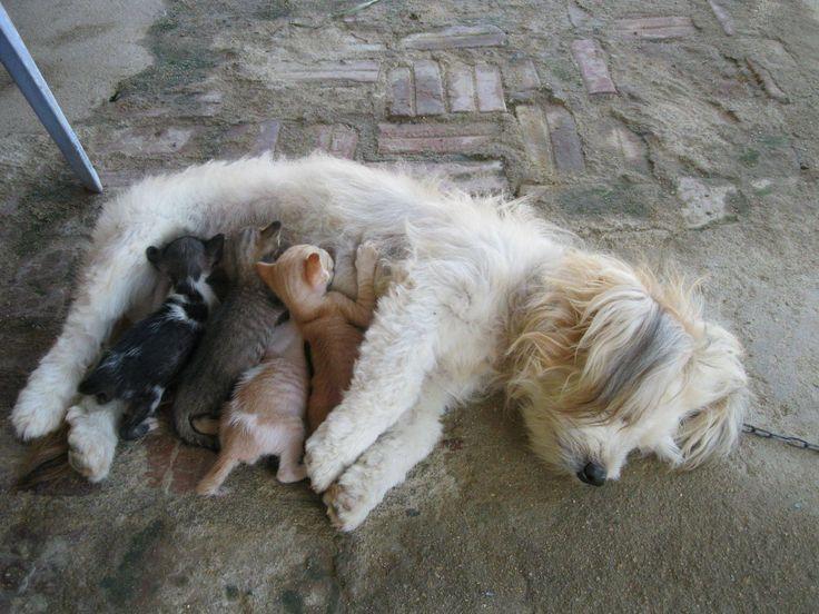 Is Milk Good For Wiener Dogs