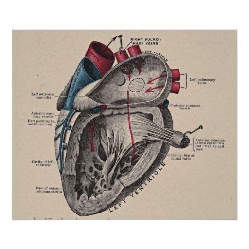 Mejores 7 imágenes de Coeur en Pinterest | Corazón anatómico ...