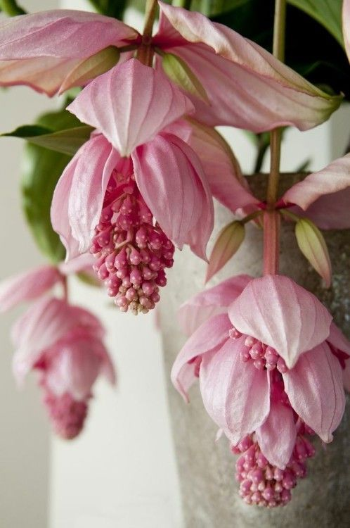 J'adore les plantes qui fleurissent, encore plus que les fleurs en elles-même…