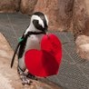 Budding Penguin Love Offers New Hope for a Troubled Species : an adorable slideshow discussing a serious problem, via TreeHugger.Bud Penguins, Adorable Slideshow, Slideshow Discussion, Colors Red, Heart, Princesses Pick, Serious Problems, Beautiful Birds, Trouble Species