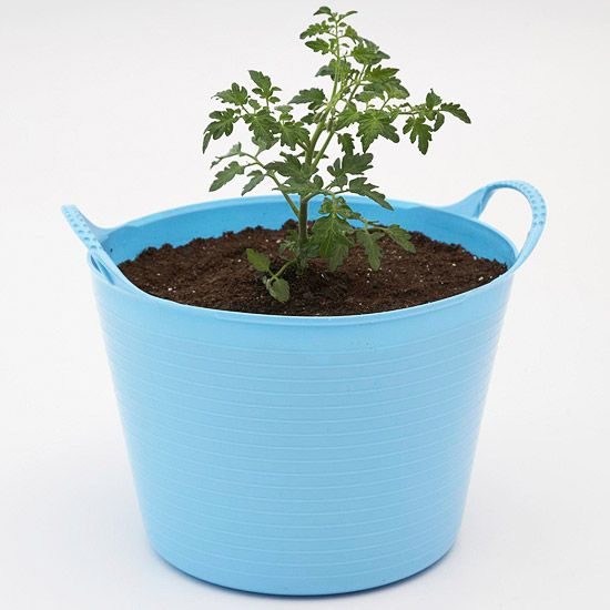Love the idea of buying cheap buckets from the dollar store for pots - Get Growing! Kids tomato plant and lettuce...great introduction to gardening for kids!