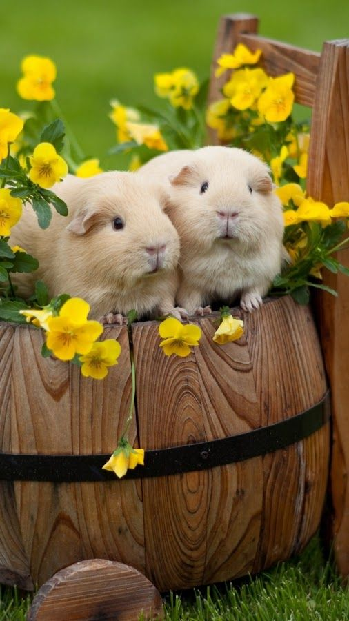 Love with flowers and animals.