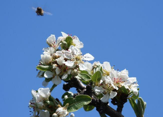 """""""Wer seinen Wohlstand vermehren möchte, der sollte sich an den Bienen ein Beispiel nehmen. Sie sammeln den Honig, ohne die Blumen zu zerstören. Sie sind sogar nützlich für die Blumen."""" (Siddhartha Gautama Buddha, Begründer des Buddhismus, 6. Jhd. v. Chr. – 5. Jhd. v. Chr.) Ist Dein Leben zu kompliziert? Bist Du oft in Eile? Hast Du Geldsorgen? Geht Dir das Aufräumen und Putzen auf die Nerve ..."""