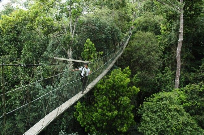 Canopy walkway, Taman Negara National Park, Malaysia | 1,000,000 Places