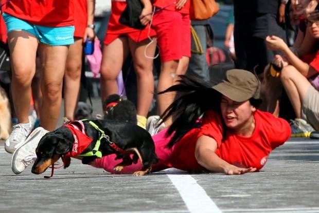 Lomba Lari Anjing dan Tuannya. Purina Alpo Dog Run