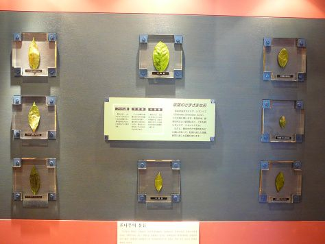 The Tea Museum in Shizuoka Prefecture is amazing. You can even grind your own Matcha there and participate in a tea ceremony and a reconstructed medieval tea house.