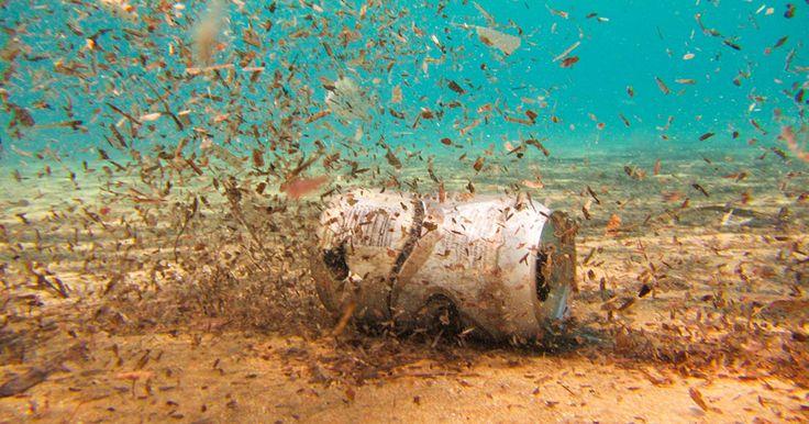 Située entre les Philippines et le Japon, la fosse des Mariannes est connue pour sa profondeur abyssale d'environ 11 000 mètres, faisant d'elle la fosse océanique la plus profonde du monde. On aurait pu penser que le ventre des océans soit encore vierge de ...