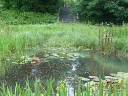 Image result for braywick nature centre