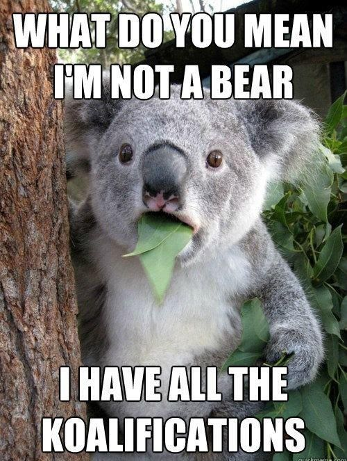 HAHAHA:  Phascolarcto Cinereus, Koalabear,  Native Bears, Funny, Funnies, Humor,  Koalas Bears,  Kangaroos Bears, Animal