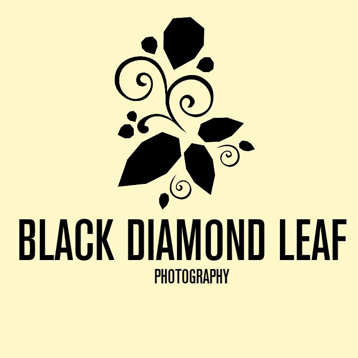design logo photography  photography desain