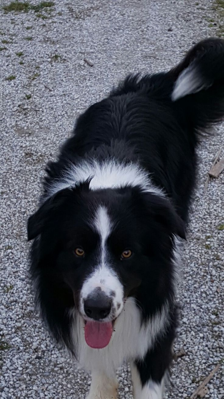 border collie andere hunde other dogs - Bordre Bad Bilder