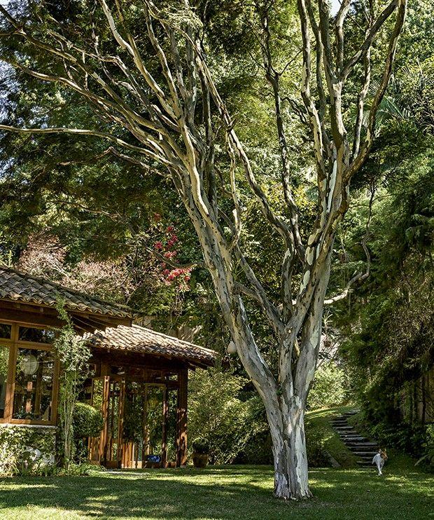 Pau-ferro: a árvore, hoje enorme, foi plantada próximo à casa para criar uma área de sombra. É embaixo dela que a família se reúne para tirar fotos em datas especiais (Foto: Edu Castello/ Editora Globo):