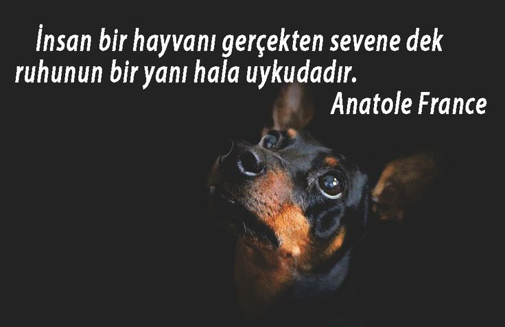 #KÖPEKLER #İLE #İLGİLİ #SÖZLER #köpek #güzelsözler #anlamlısözler #manalısözler #güzel #sözler #özlüsözler