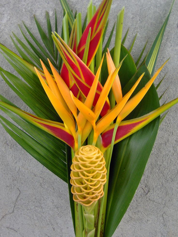 26 best pretty plants images on pinterest tropical plants plant pictures and tropical flowers for Garden plants names and pictures