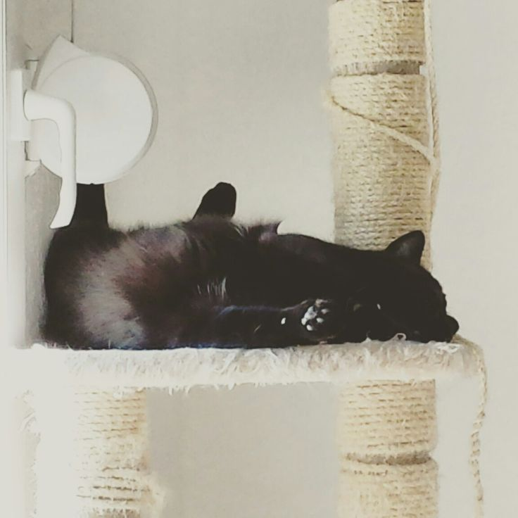 Life is hard #Snow #cat