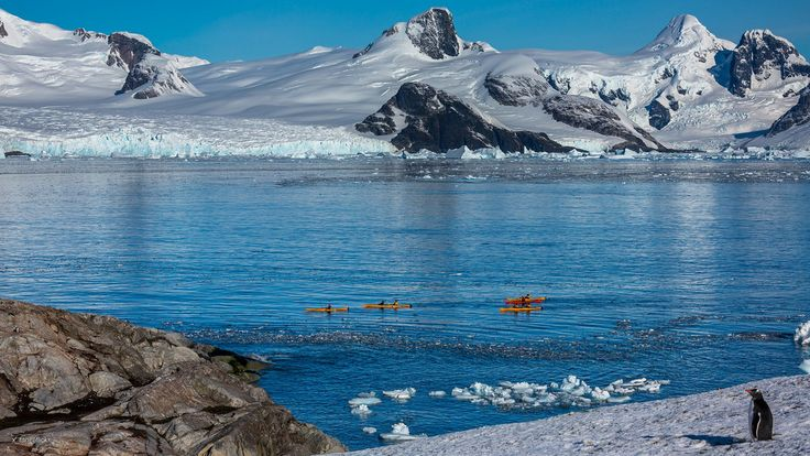 antarctica kayaking - Поиск в Google