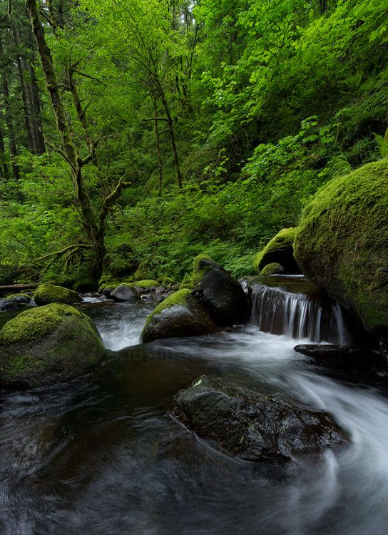 Photo Green Harmony by Dustin Gent on 500px