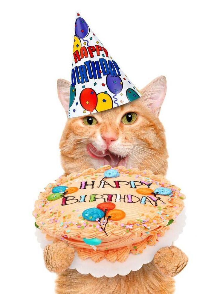 картинки кошачье день рождение поп