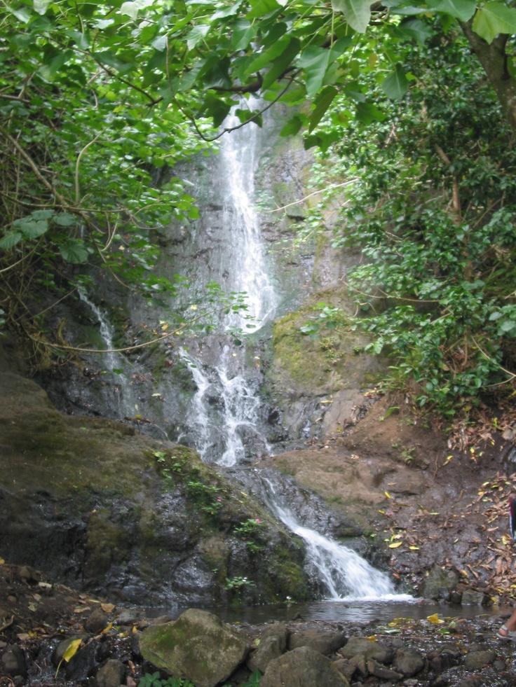 Rainforest Hike, Oahu photo by Michele Nelson