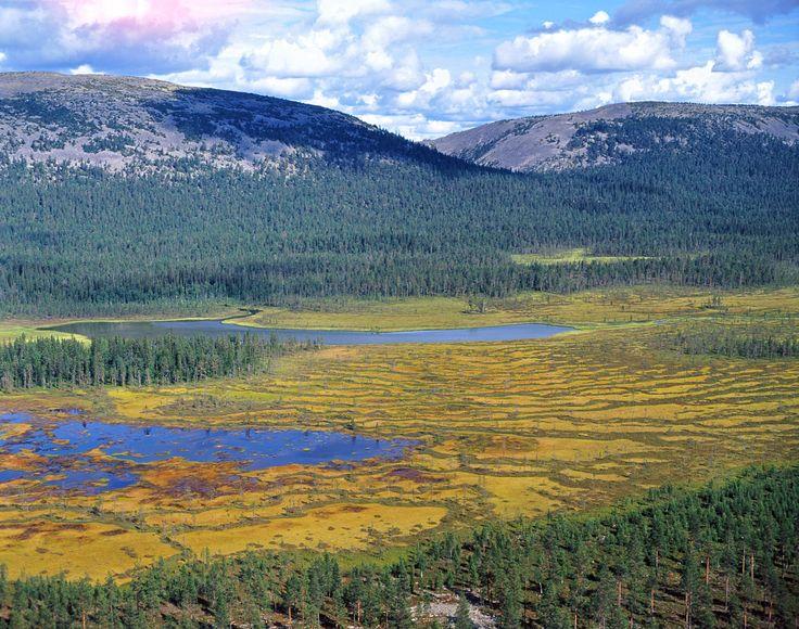 National park Pyhaluosto - Pyhä-Luoston kansallispuisto