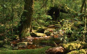 Vorschau Tapete Holz, Bach, Steine, Moos, Bäume, Vegetation, Schimmer, Schatten