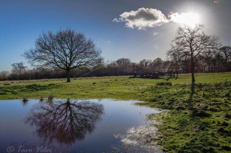 Richmond park by Tavo