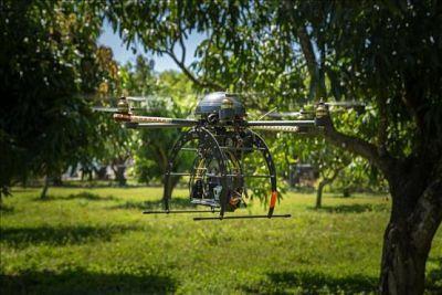 Drones y perros para salvar a los aguacates de los hongos :http://www.xdrones.es/2015/05/drones-y-perros-para-salvar-a-los-aguacates-de-los-hongos/