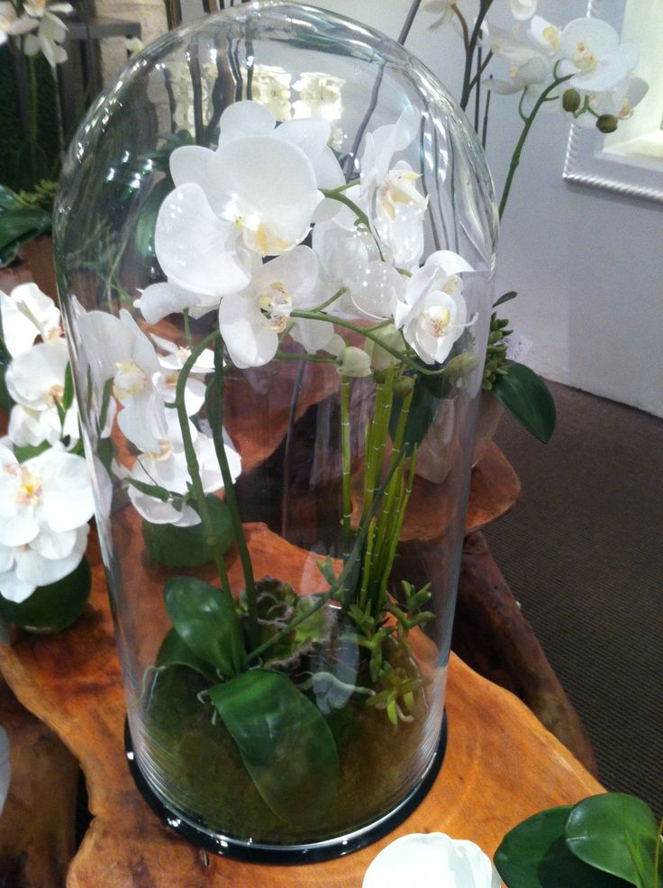 Bell jar faux orchids.