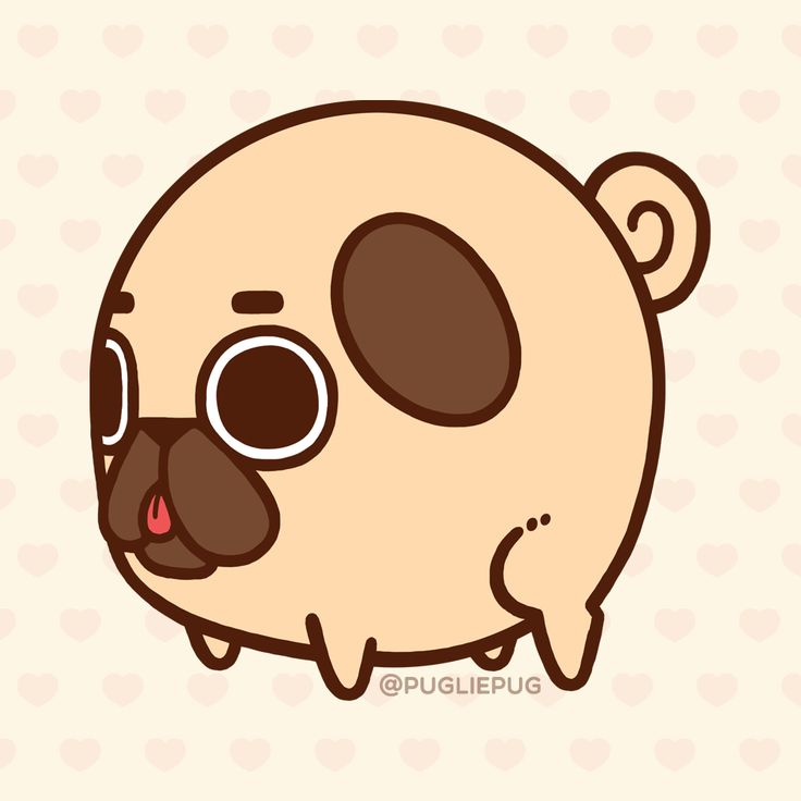 Puglie Pug : Photo
