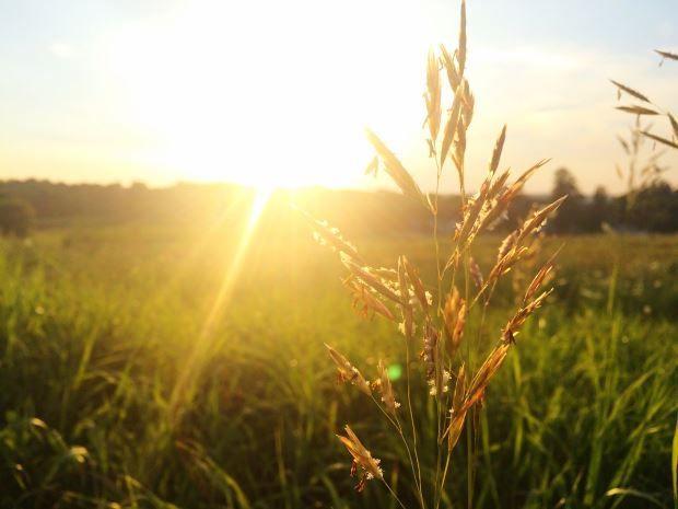 Remedios naturales contra la alergia estacional #alimentatubienestar